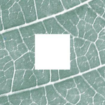 Stichting Tuinen Mien Ruys logo - Visit hardenberg