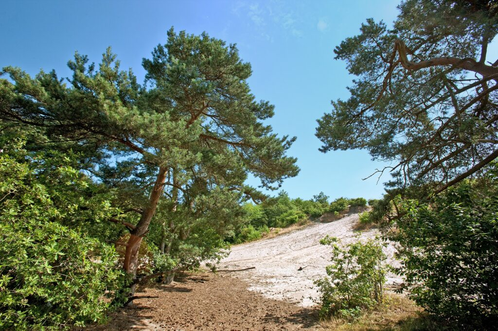 Zandverstuiving Rheezerbelten - Visit Hardenberg